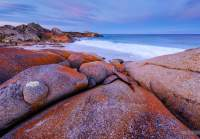 The signature orange lichen on granite of the Bay of Fires in glorious dusk light.
