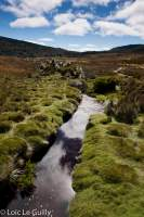 Cradle Mountain creek with moss and pandani