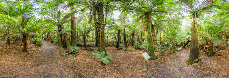 360 panorama of Forest near St Columba Falls
